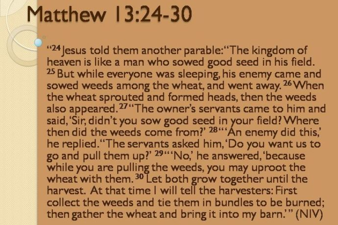 Parable of the Wheat and the Weeds--Matthew 13-30