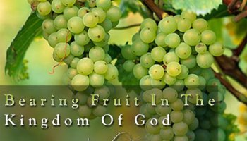 We Are All Called to Bear Fruit